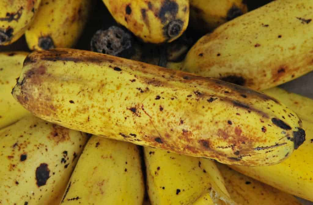 banaan fruitvliegjes