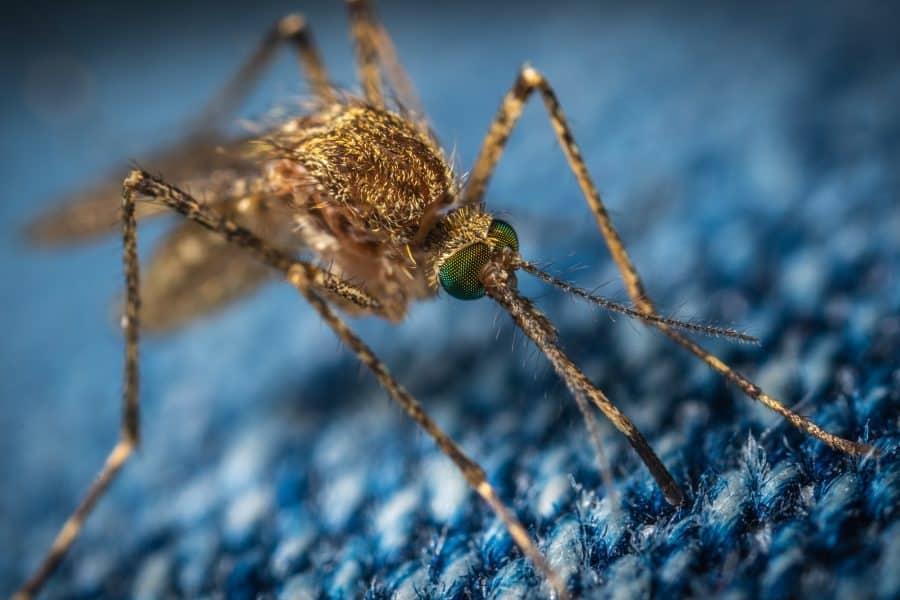 muggen verjagen