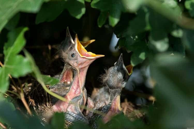 beleef de lente vogels nest