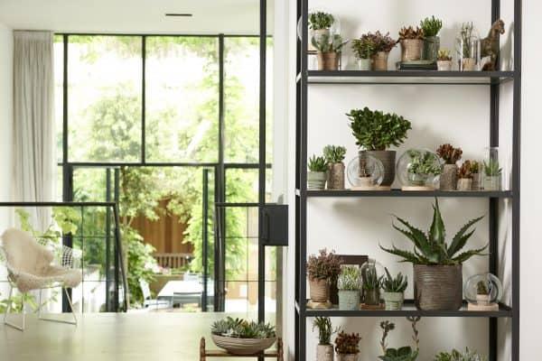 hydroponie plantjes glazen pot