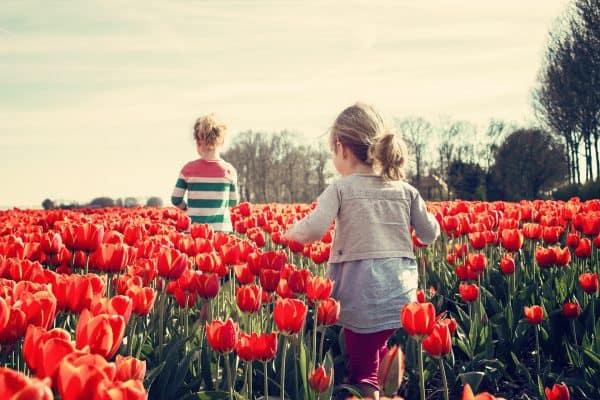 pluktuinen tulpen kleinkinderen