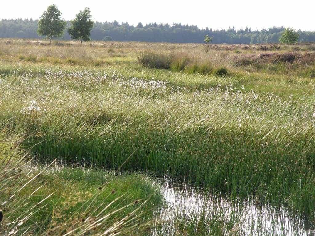 Wandeltips in Nederland Drenthe