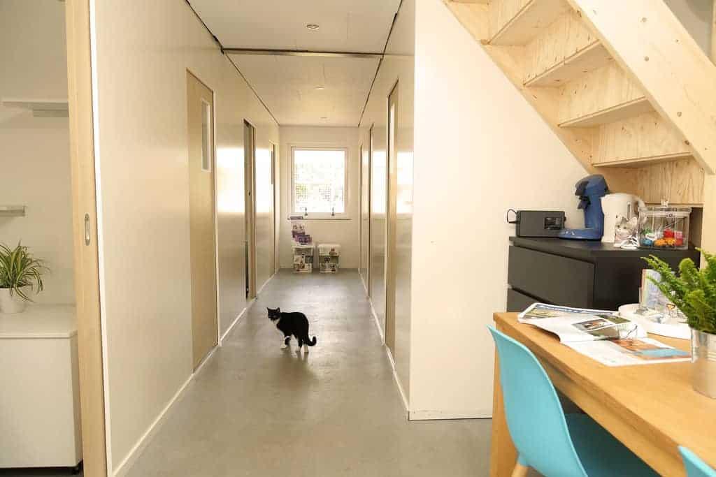 kattenhotel - alles is foto