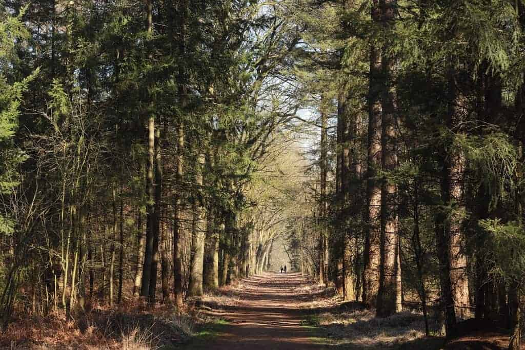 wandelen in Nederland Mastbos