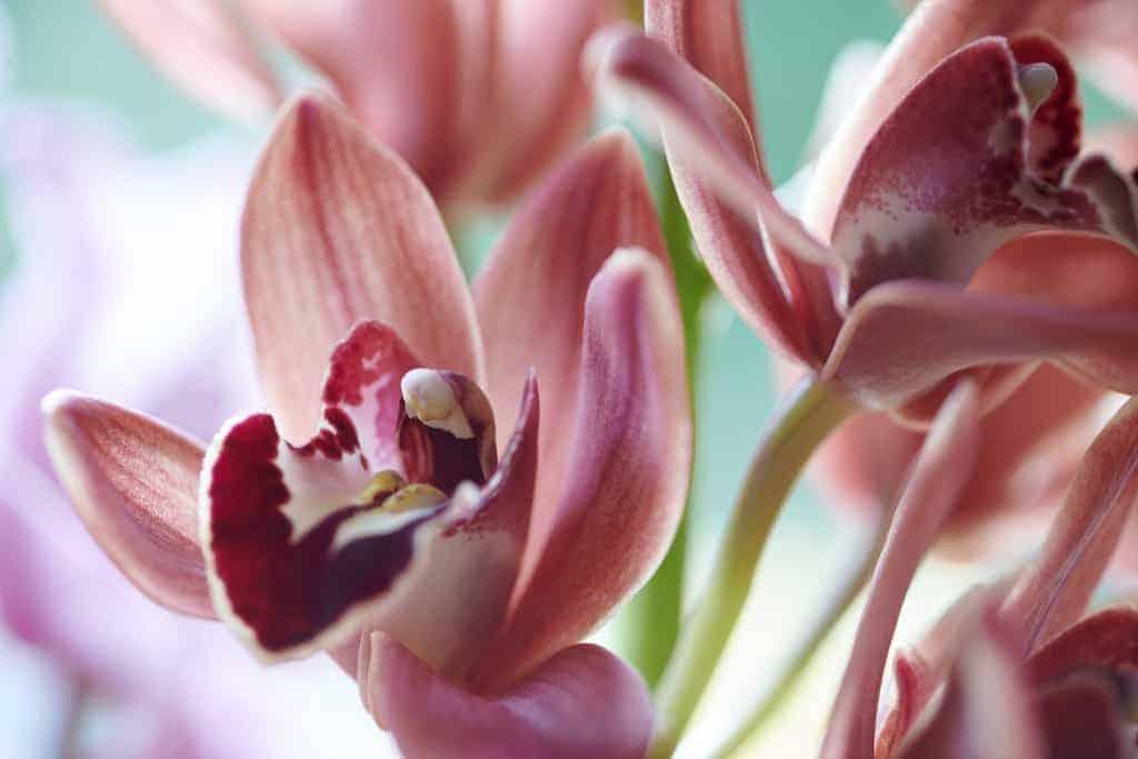 zeg het met bloemen Bloemenbureau Holland alstroemeria