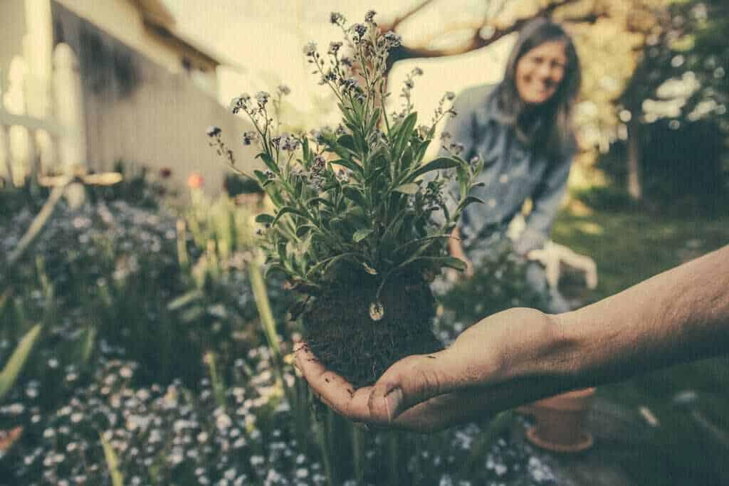 tuinieren ontspannende hobby's