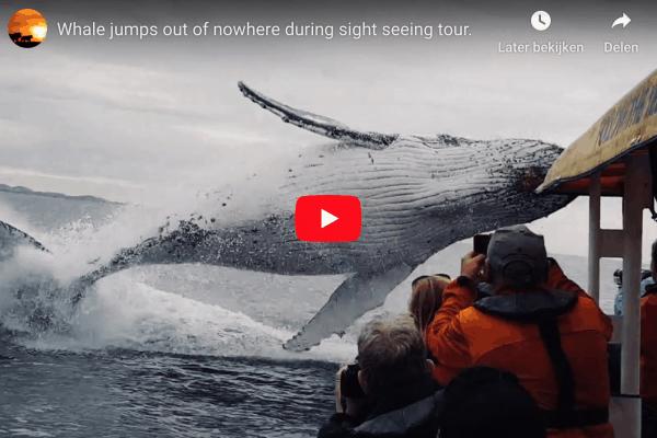 walvis laat zich van wel heel dichtbij zien