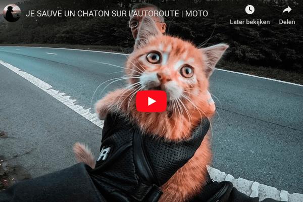 Belgische motorrijder redt kitten