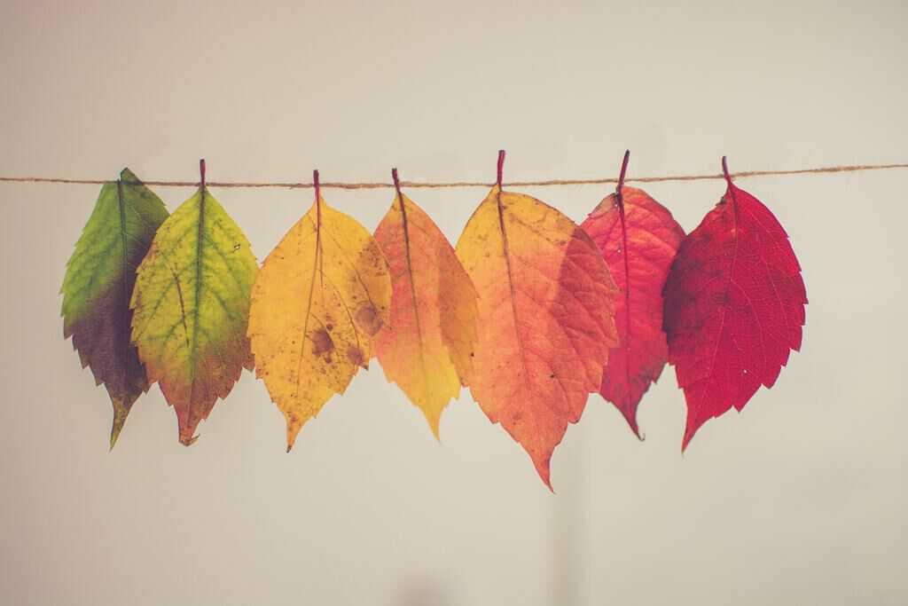 herfstkwaaltjes herfstblaadjes