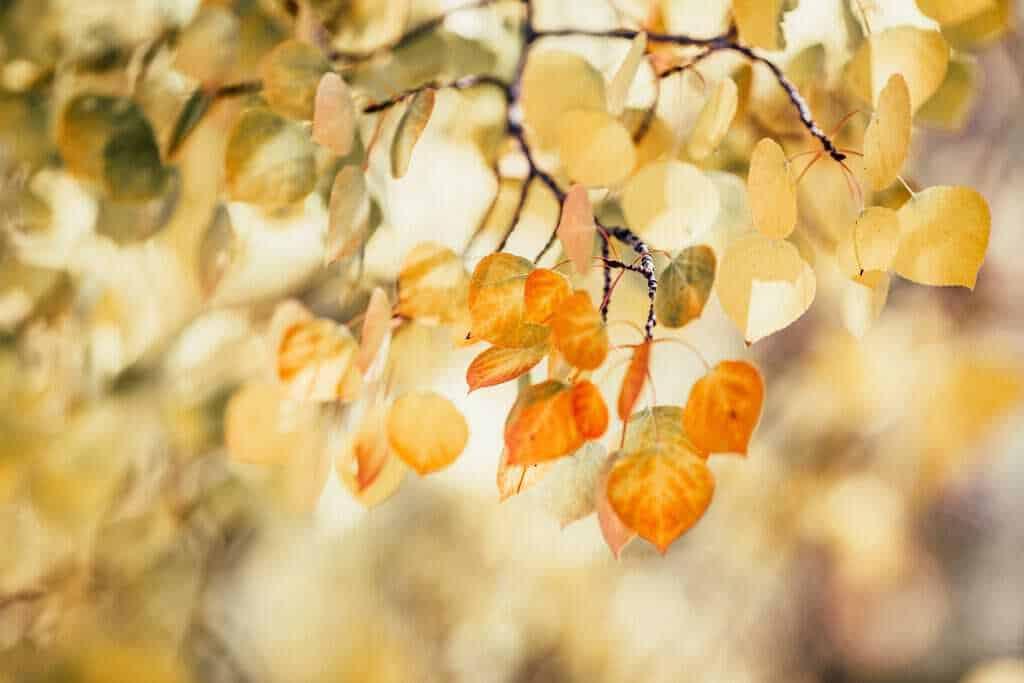 september herfst