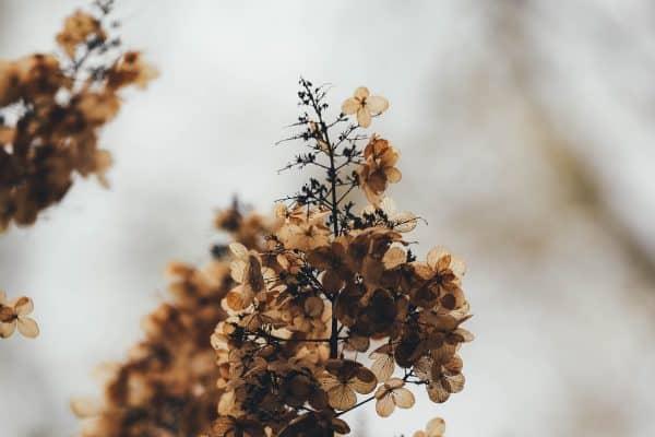 droogbloemen terug