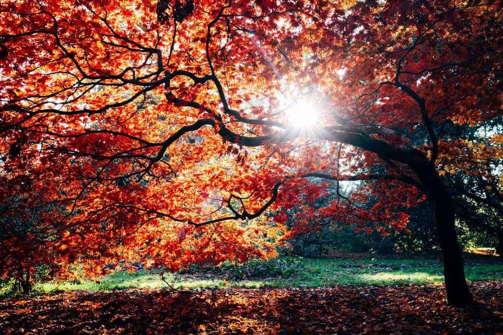 herfstdip zon