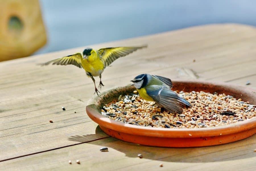 herfstvoer voor vogels
