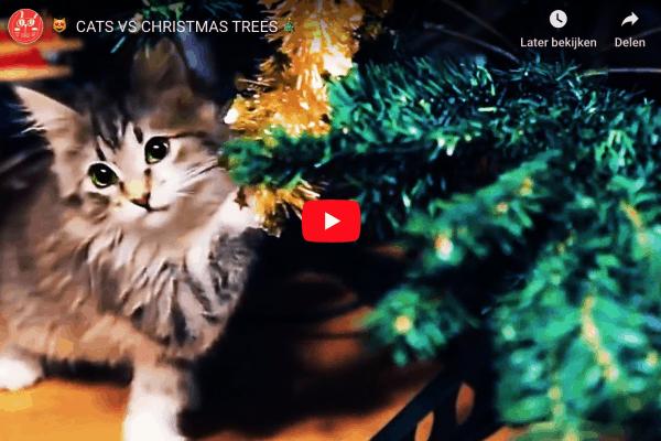 kat in de kerstboom
