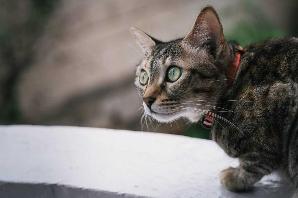 katten buiten