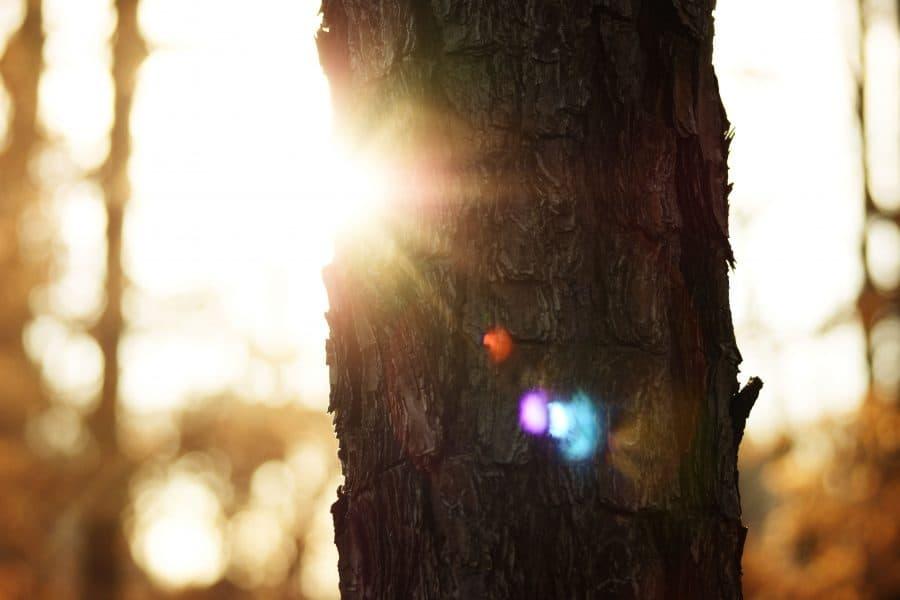 lichttherapie dip