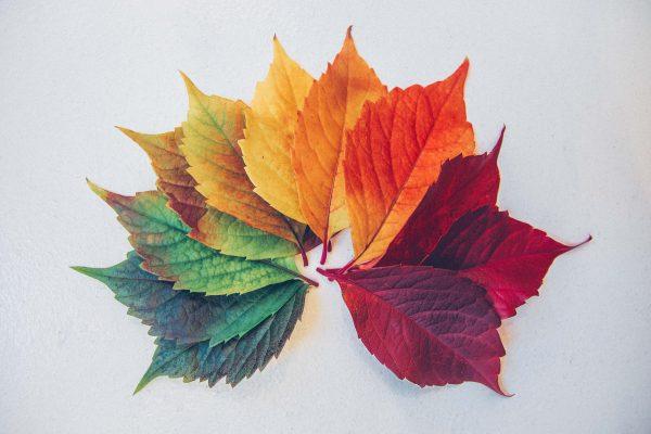 seizoenen bladeren