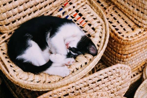 dutjesbar slapen