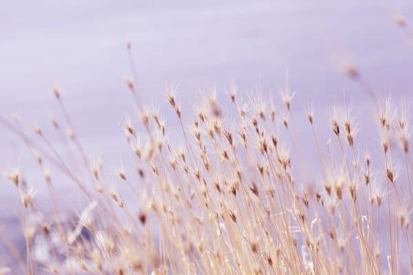 zachte winter bloei