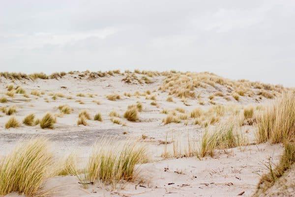 duinen natuur