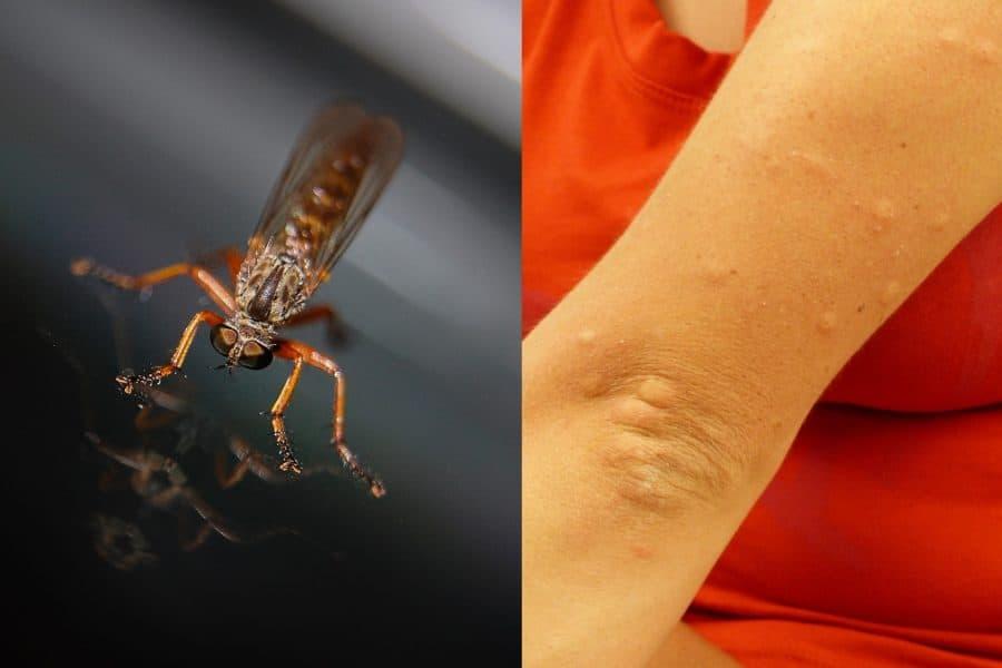 muggenbulten middeltjes