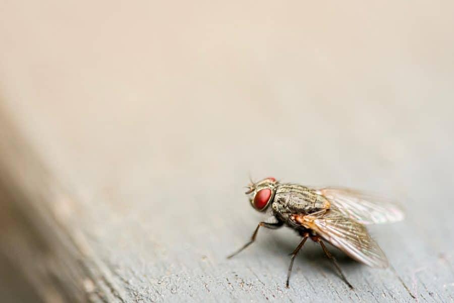 vlieg vliegenvanger