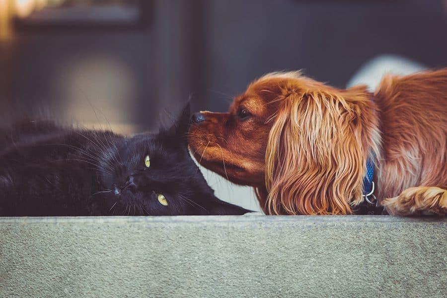 dierenasiel kat hond