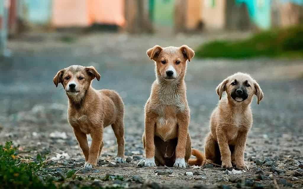 dierenasiel honden