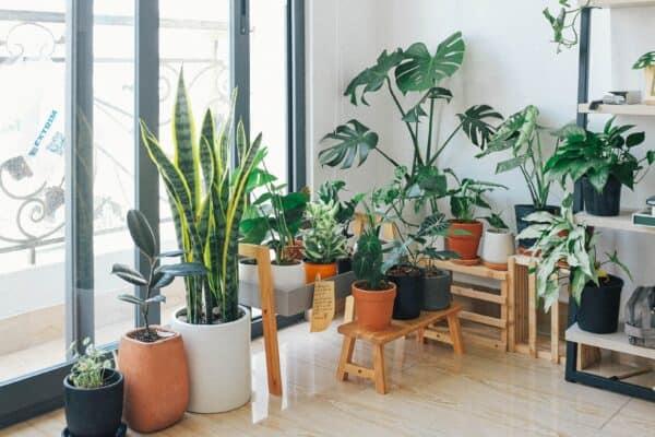 planten winter