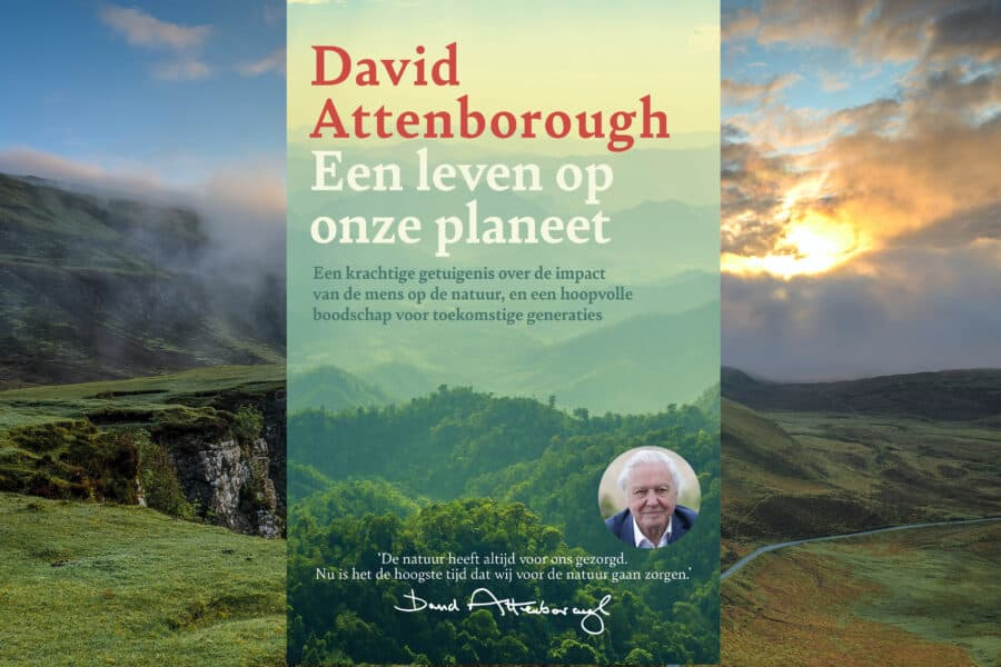 david boek