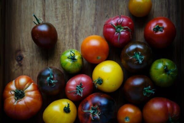 tomaten moestuin