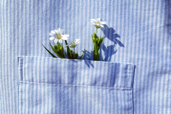 voorjaarslook bloem
