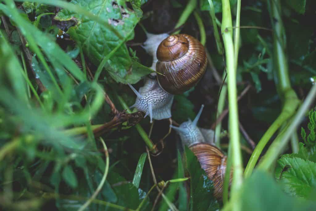 slakken ongedierte