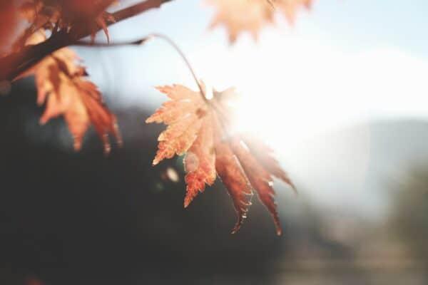 zomer herfst